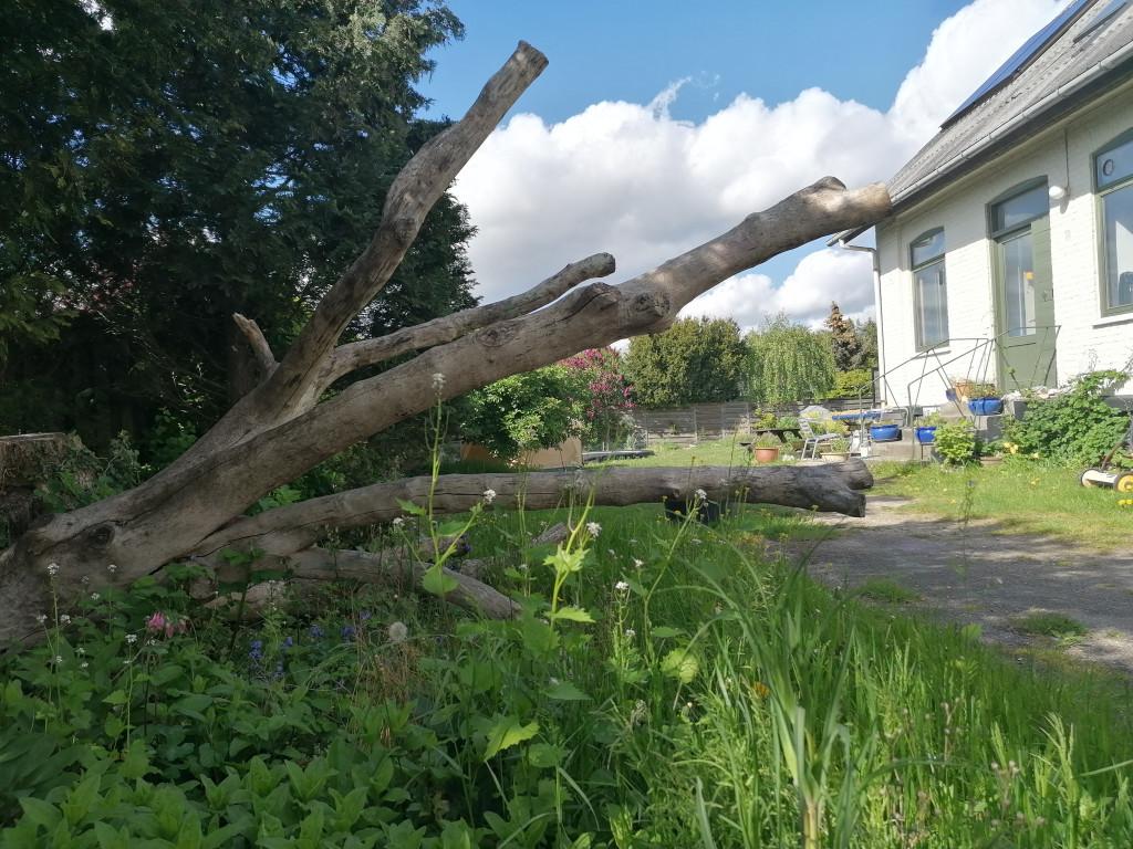 Villalejlighed i lille bofællesskab i Ballerup - IMG_20200519_161629_83631e73faad91392efeb04cb6eaf0b2