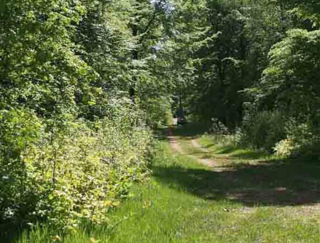 Syv sammenhængende grunde i Sverige - Skovlandskab_-_projektet_ved_HoYrby_abeded2cab707624765d7f6aa2241935