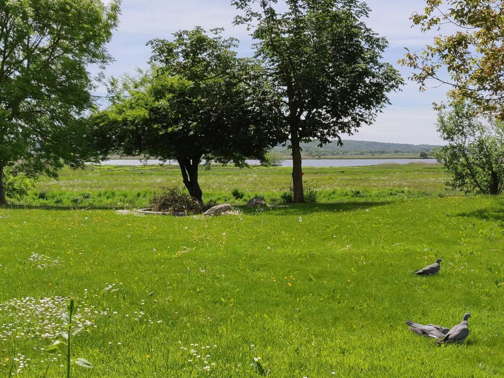 Unik, flot og utraditionel andelsbolig i velfungerende bofællesskab i Randers med udsigt ud over Hornbæk Enge - Udsigt_stuen_ed590a39f30f73efde70264326600a7f