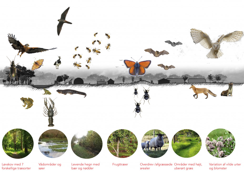 Fællesmark har byggegrunde til salg - diagram_Biodiversitet_1a71ead829e43c2dcea9ad6ddb5b9366