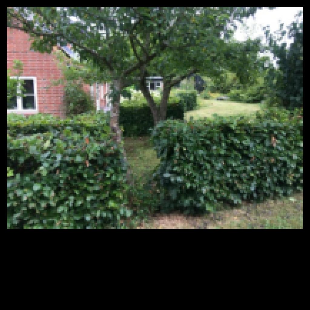 Stor  moderniseret villa i bofællesskab i  Bjert v.Kolding - haven_3a6fdc42ad2bbc764cae5d2a2b0fa86a